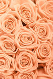 Tan and peach rosesbackground pattern Royalty Free Stock Images