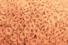 Tan and peach rosesbackground pattern Stock Photo