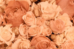 Tan and peach rosesbackground pattern Stock Photos