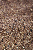 Tan Sesame Seeds Royalty Free Stock Image