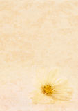 Tan texture and white flower Royalty Free Stock Images
