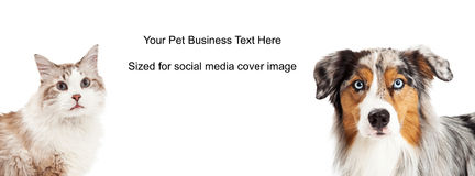 Tan and White Dog Cat Cover Photo Stock Photos