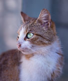 Tan and White Short Fur Cat on Close Up Photography Royalty Free Stock Photos