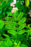 Tan-Zweig-Blatt im Garten Lizenzfreies Stockbild