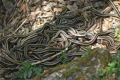 Tana 1 del serpente fotografia stock