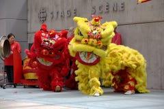 tana chiński lew Fotografia Royalty Free