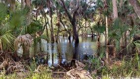 Tana degli alligatori Fotografia Stock Libera da Diritti
