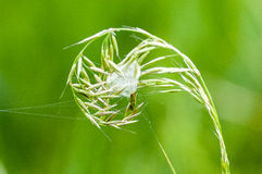 Tana invertebrata del ragno del ritratto Fotografia Stock