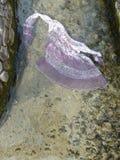 Tana jedwabiu suknia w zimnej wodzie Obraz Royalty Free