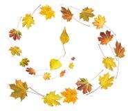 tana jesienny czas Zdjęcia Royalty Free