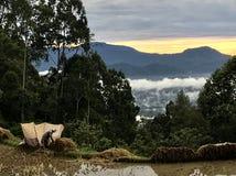 Tana Toraja immagine stock libera da diritti