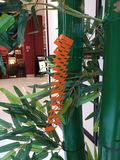 Tanabata decoration. Tanabata festival decoration Stock Photo