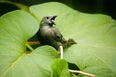 tanager ладони Стоковые Фото