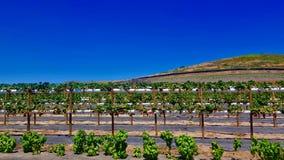 Tanaka Farms Strawberry Patches in de Zomer royalty-vrije stock foto's