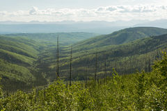 Tanana Valley State Forest, Alaska Royalty Free Stock Images