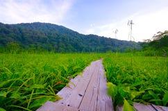 Tanashiro Marshland, Japan. Tanashiro Marshland, Shirakami Sanchi World Heritage, Japan royalty free stock photo