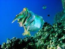 tancerza underwater Obrazy Royalty Free