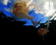 Tancerze morze Fotografia Stock