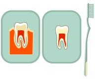 Tand en tandenborstel vector illustratie