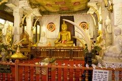tand för tempel för kandy lankasri Arkivbild