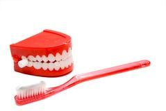 tand- hygien Arkivbild