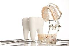 Tand- käkemodell och medicinsk tand- utrustning Royaltyfria Bilder