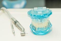 Tand- modell och tand- hjälpmedel i tand- klinik Royaltyfri Foto