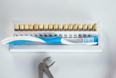 Tand- modell och tand- utrustning på blå bakgrund, begreppsbild av tand- bakgrund tand- hygien för bakgrund Arkivfoton