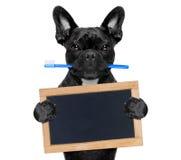 Tand- tandborstehund Arkivbild