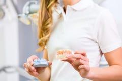Tand- tekniker som kontrollerar tandprotesen Royaltyfri Bild