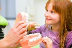 Tandarts die meisjes schoonmakende tand verklaren royalty-vrije stock afbeelding