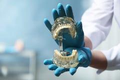 Tandarts die onderwijsmodel van mondholte met tanden in kliniek, close-up houden stock afbeeldingen