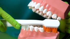 Tandarts die tonen hoe te tanden met kaakmodel en tandenborstel, tandzorg schoon te maken royalty-vrije stock afbeelding