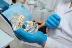 Tandarts met Patiënt Tandarts die een model van tanden tonen Royalty-vrije Stock Foto