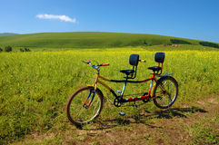 Tandem bicyle. A Tandem bicyle beside the flowers field Stock Photos