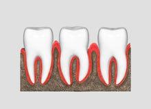 tanden Royalty-vrije Stock Afbeelding