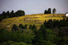 Tandil, Buenos Aires, Argentina. Small city near the hills in the middle of Buenos Aires. Famous for its moving rock and religious paths Stock Photography