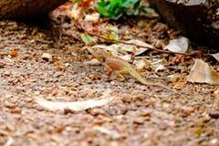 Tandis que les lézards en parc Photographie stock libre de droits