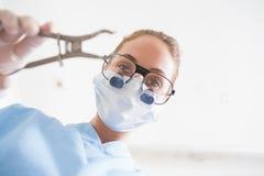 Tandläkare i kirurgisk maskering och tand- loupes som rymmer plattång över patient Arkivbilder