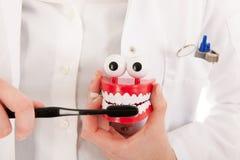 Tandläkare med borste- och tandprotesvisningen ho som ska göras Royaltyfri Foto
