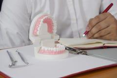 Tandläkare som sitter på tabellen med tandmodellen och hjälpmedel i yrkesmässigt tand- tand- och medicinsk begrepp för klinik, royaltyfri foto