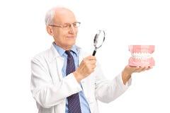 Tandläkare som undersöker en tandprotes med förstoringsglaset Arkivbild