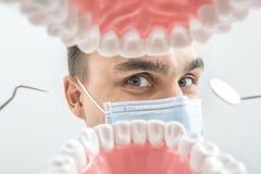 Tandläkaren ser till och med käkemodell arkivbild