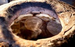 Tandoor oven Stock Image