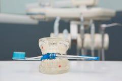 Tandtanden Model en tandhulpmiddel Stock Foto