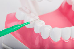 Tandtråd Royaltyfri Fotografi