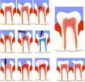 Tandvård Arkivfoton