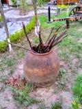 Tandyr avec la fin de four du feu vers le haut de la photo sur le fond vert extérieur de jardin d'été image stock