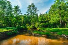 Tanew-Fluss, der zwischen Wiesen meandring ist stockbilder