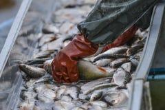 Étang de pêche Photographie stock